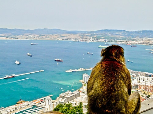 A monkey sat on The Rock of Gibraltar