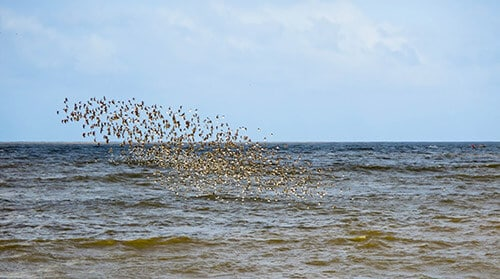 Birds flocking off the coast of Kourou
