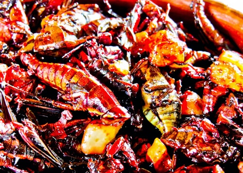 Chapulines de Oaxaca, Grasshoppers to eat