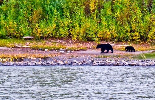 Wildlife viewing tour, Denali National Park