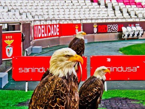 Benfica stadium tour, Estadio da Luz, eagles