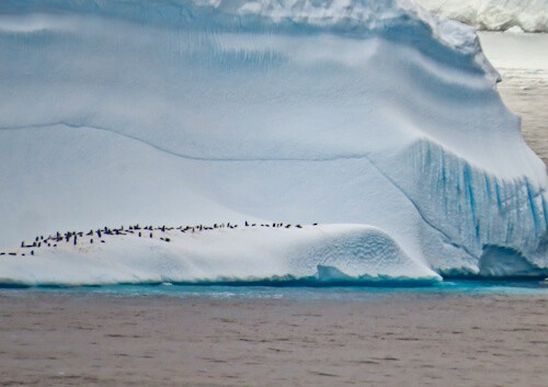 Visit Antarctica - Penguins on a huge Iceberg