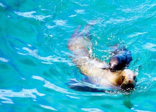 Puerto Madryn - Sea Lion, Punta Loma, Argentina