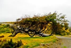 Flag Tree, Ushuaia, Tierra Del Fuego
