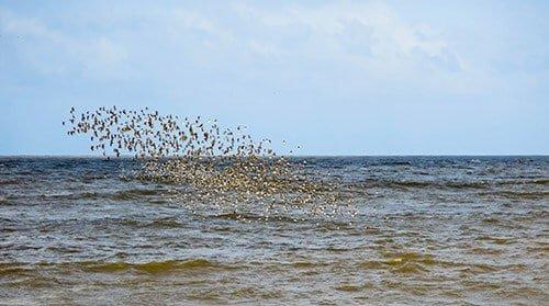 Kourou River - Birds flocking