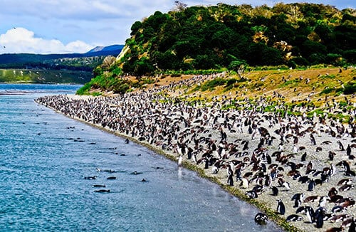Things to do in Ushuaia Argentina - Penguin Excursion day trip