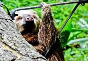 Things to do in Cali Colombia - Cali Zoo