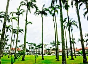 Cayenne French Guiana - Place des Palmistes