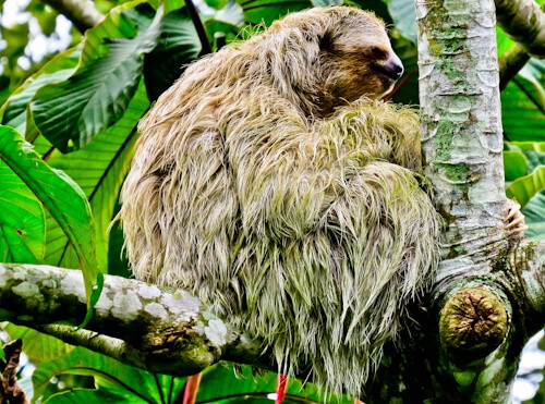 Things to do in San Jose Costa Rica - Sloths