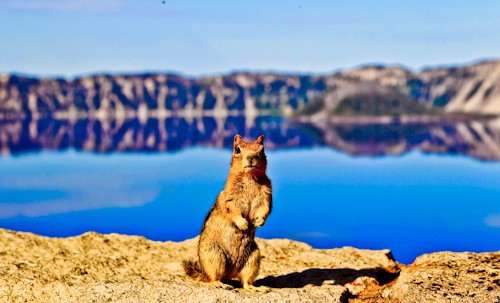 Squirrel, Crater Lake, Oregon