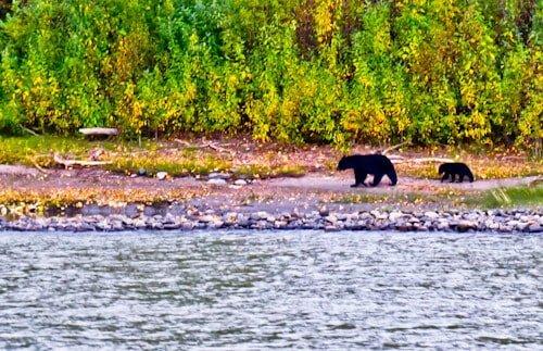 Wildlife viewing tour, Denali National Park