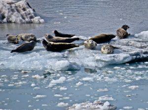Marine Life in Glacier Bay National Park