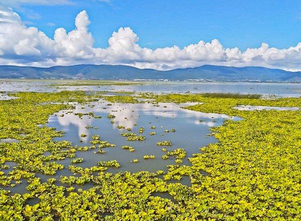 Lake Chapala (Day Trip)
