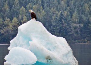 Wildlife at Mendenhall Glacier