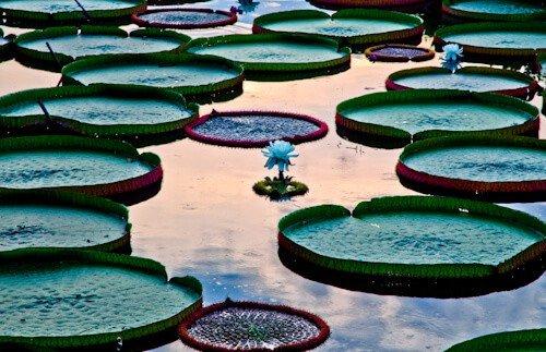 Udon Thani Park, Udon Thani