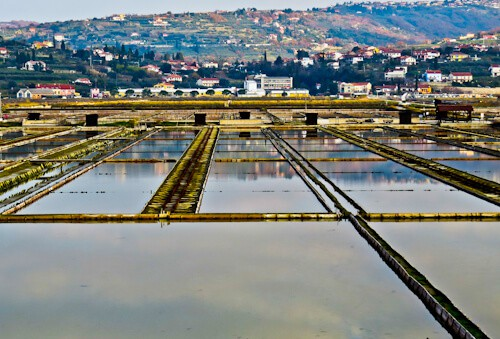 Things to do in Portoroz - The salt fields
