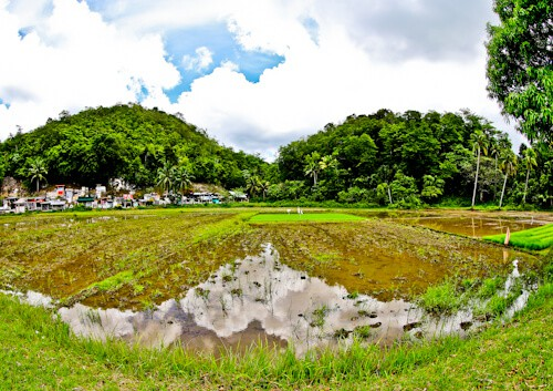 Bohol - Things to do in Bohol Philippines - Rice Fields