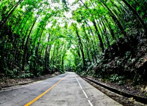 Bohol - Things to do in Bohol Philippines - Man Made Forest