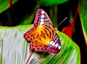Bohol - Things to do in Bohol Philippines - Habitat Butterflies Conservation Center