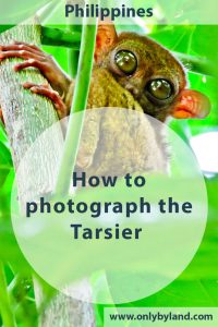 Tarsier - Where to find the Philippine Tarsier and how to photograph it.