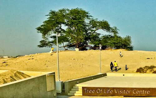 Things to do in Bahrain - Tree of Life