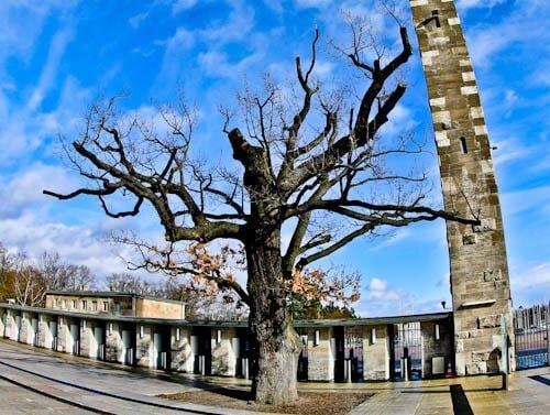Olympiastadion - Berlin Olympic Stadium Tour - Oak Tree