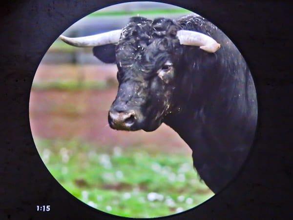 Pamplona Bull Stadium Tour - Plaza de Toros - Life of a Bull Video