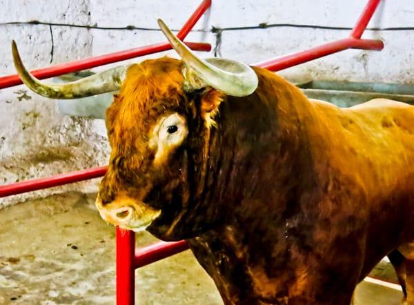 Pamplona Bull Stadium Tour - Plaza de Toros - Taxidermy Bull