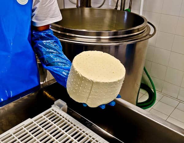 Traditional Cheese Dairy - Lipsi Island Greece - Organic Lipsi Cheese