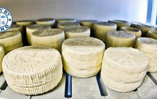 Traditional Cheese Dairy - Lipsi Island Greece