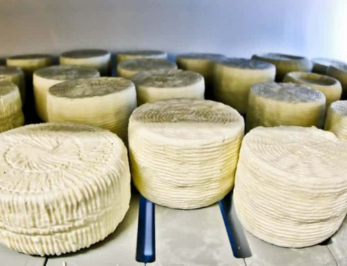 Traditional Greek Cheese Dairy – Lipsi Island Greece