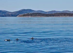 What to do in Zadar County Croatia - Dolphin Watching