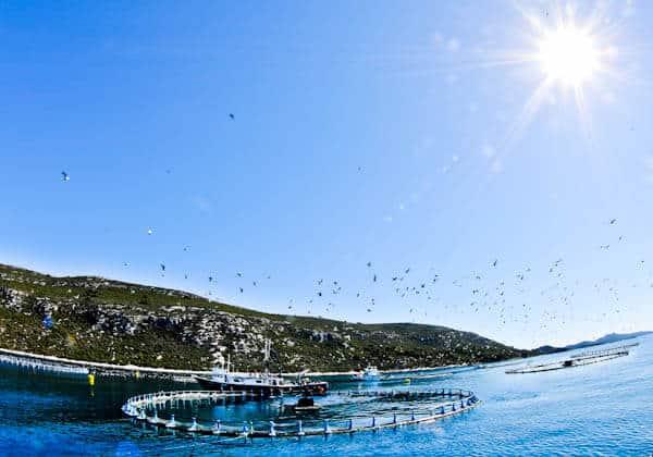 What to do in Zadar County Croatia - Croatian Tuna