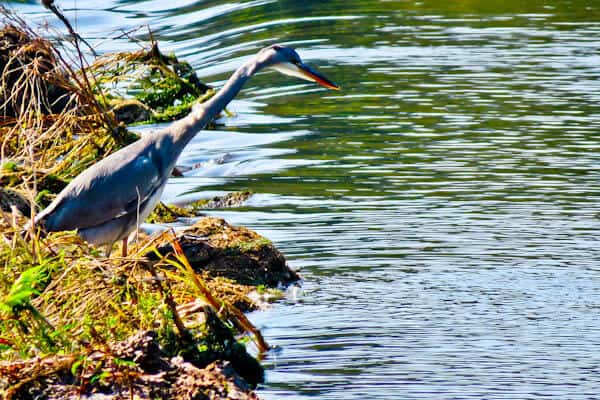 Things to do in Ponte de Lima - Birdwatching in the River Lima