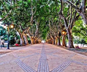 Things to do in Ponte de Lima Portugal - Avenida dos Platanos
