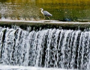 Things to do in Tomar Portugal - Birdwatching