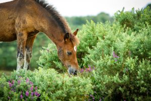The New Forest's most Beautiful Landscapes - Heathland