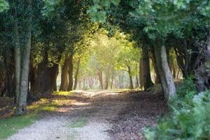 The New Forest's most Beautiful Landscapes - Woodland