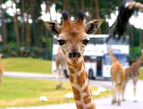 5 of the Top Safari Destinations in East Africa – The 5 Your Must Visit