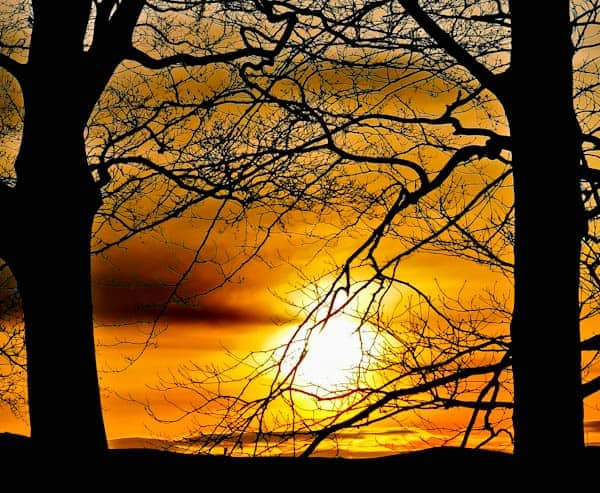 Sunrise behind tree from Carleton Moor