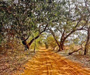 Road to Slave Island, The Gambia
