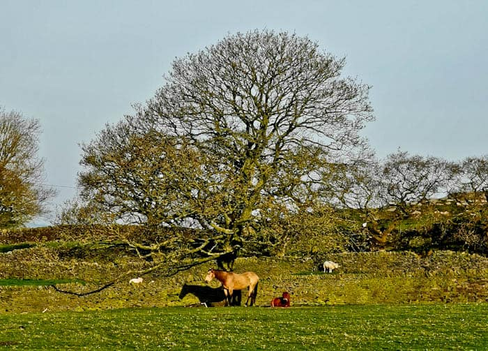Horses in Yorkshire
