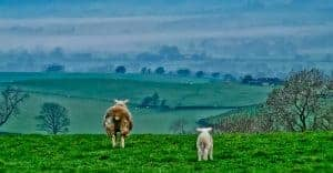 Wildlife Photography Taken in Yorkshire During 2020 Lockdown