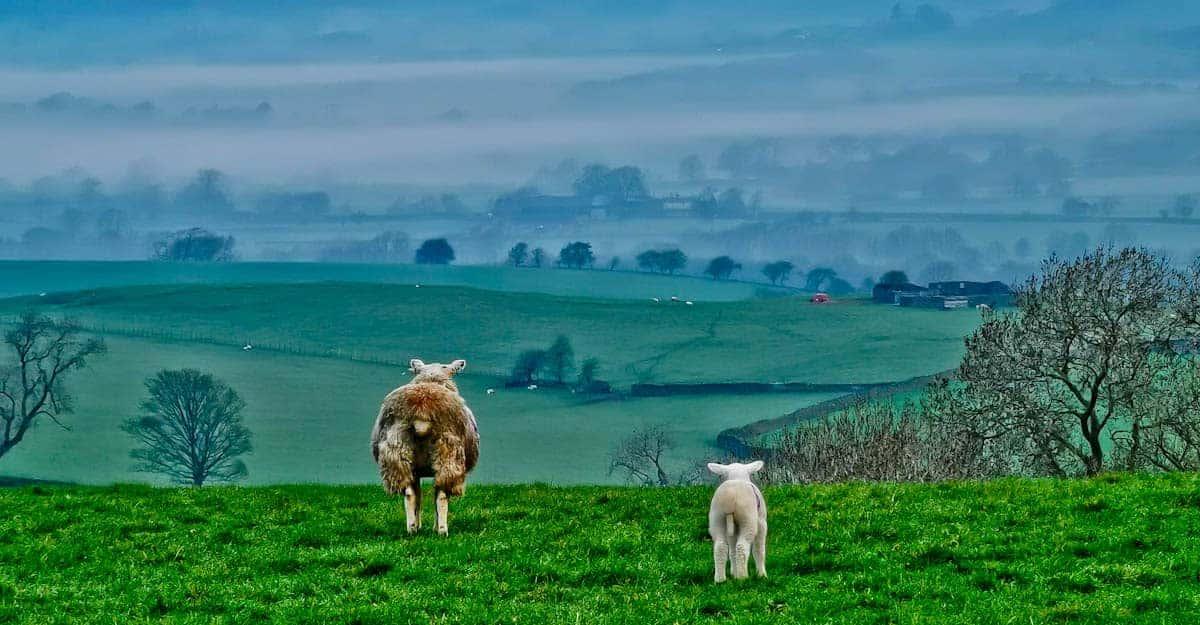 Wildlife Photography Taken in Yorkshire During 2020 Lockdown