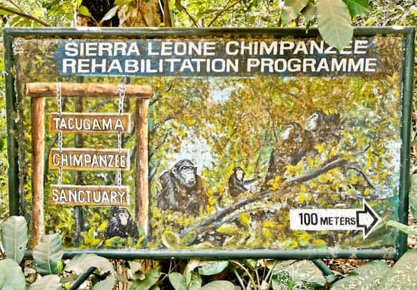 Tacugama Chimpanzee Sanctuary - Freetown