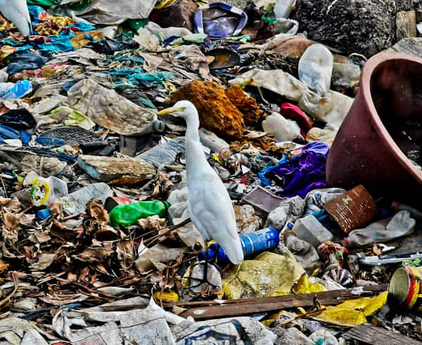 Trash in Conakry