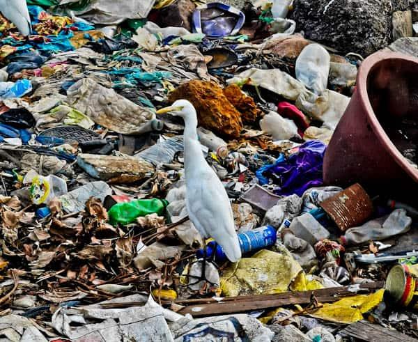 Trash in Conakry