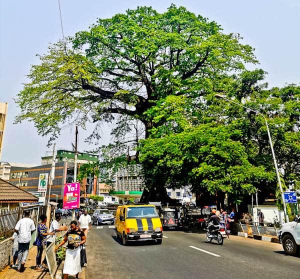 Cotton Tree, Sierra Leone