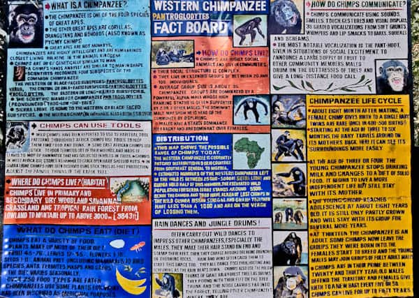 Chimpanzee Information Board