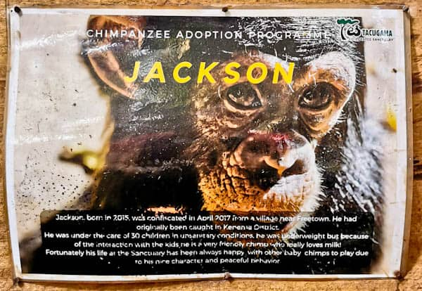 Jackson at the Chimpanzee Sanctuary